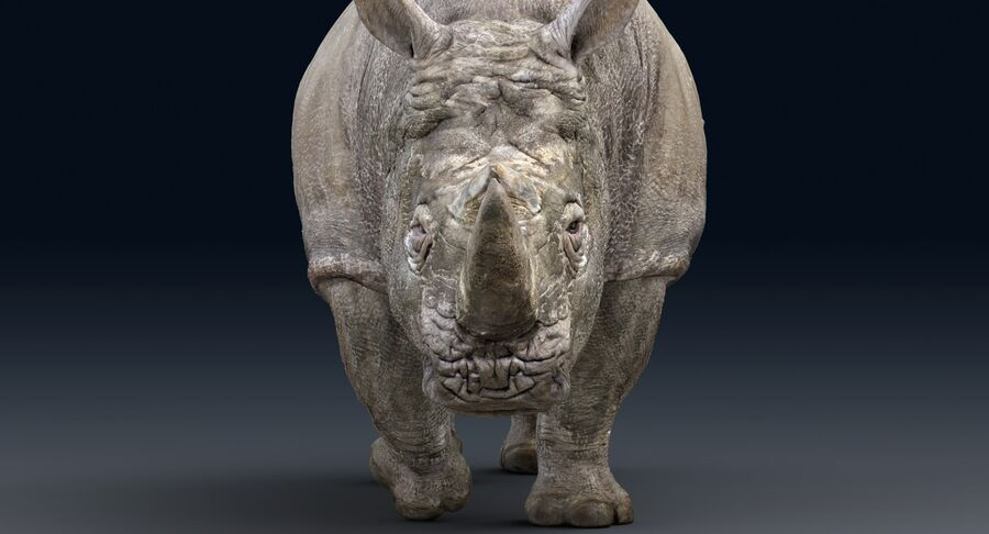 Rhinoceros_Rigged royalty-free modelo 3d - Preview no. 9