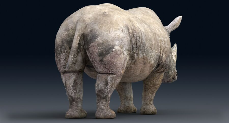 Rhinoceros_Rigged royalty-free modelo 3d - Preview no. 15