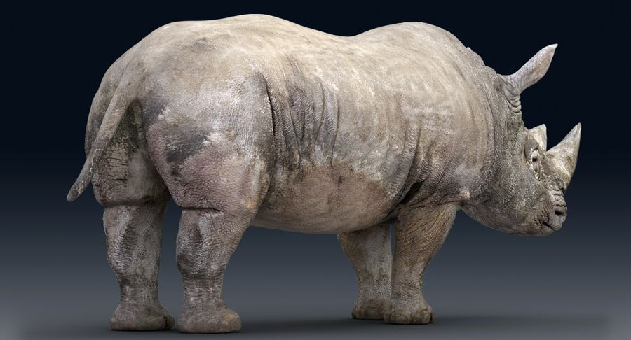 Rhinoceros_Rigged royalty-free modelo 3d - Preview no. 13