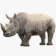 Носорог, прикрепленный 3d model