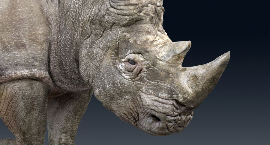 Rhinoceros_Rigged royalty-free modelo 3d - Preview no. 5