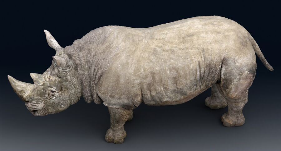 Rhinoceros_Rigged royalty-free modelo 3d - Preview no. 16