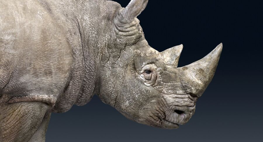Rhinoceros_Rigged royalty-free modelo 3d - Preview no. 11