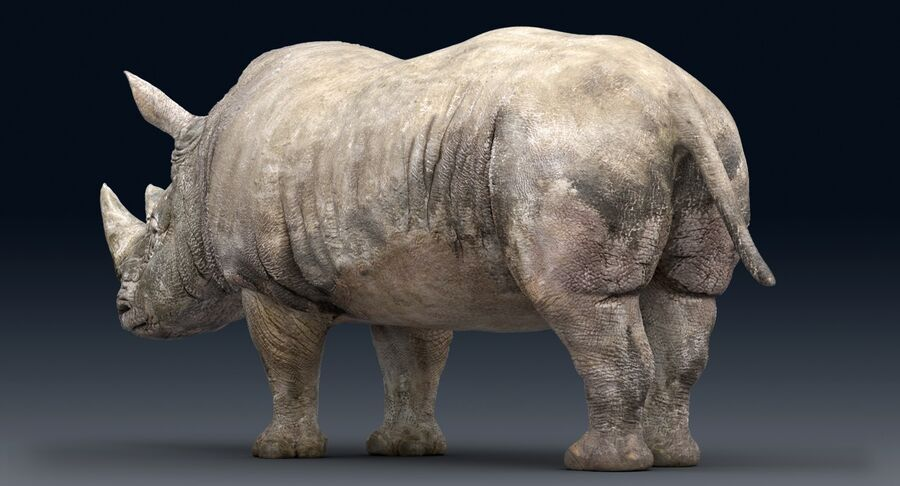 Rhinoceros_Rigged royalty-free modelo 3d - Preview no. 14