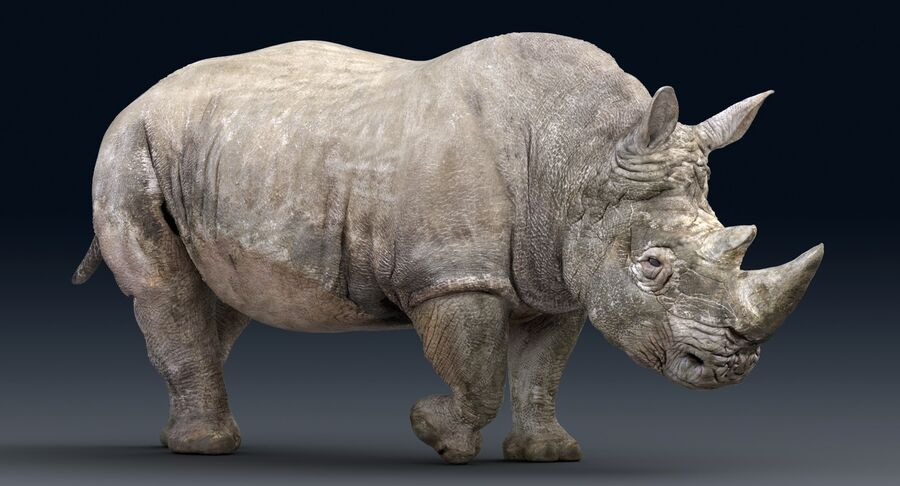 Rhinoceros_Rigged royalty-free modelo 3d - Preview no. 4