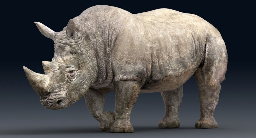 Rhinoceros_Rigged royalty-free modelo 3d - Preview no. 6