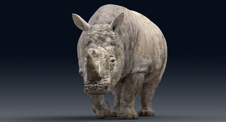 Rhinoceros_Rigged royalty-free modelo 3d - Preview no. 8