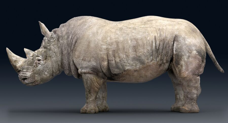 Rhinoceros_Rigged royalty-free modelo 3d - Preview no. 7