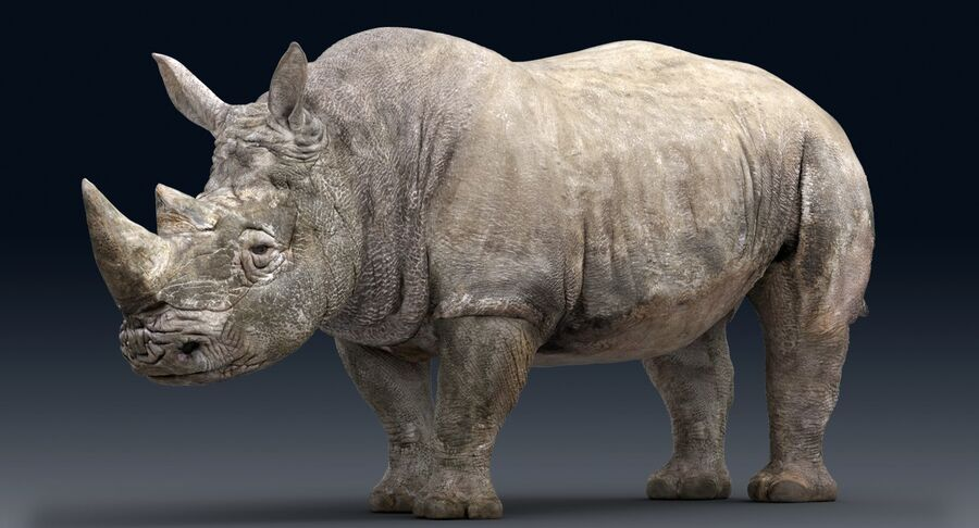 Rhinoceros_Rigged royalty-free modelo 3d - Preview no. 3