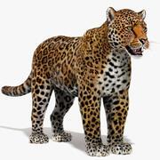 Jaguar (päls) 3d model