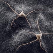 dois neurônios em um modelo 3D de fundo 3d model