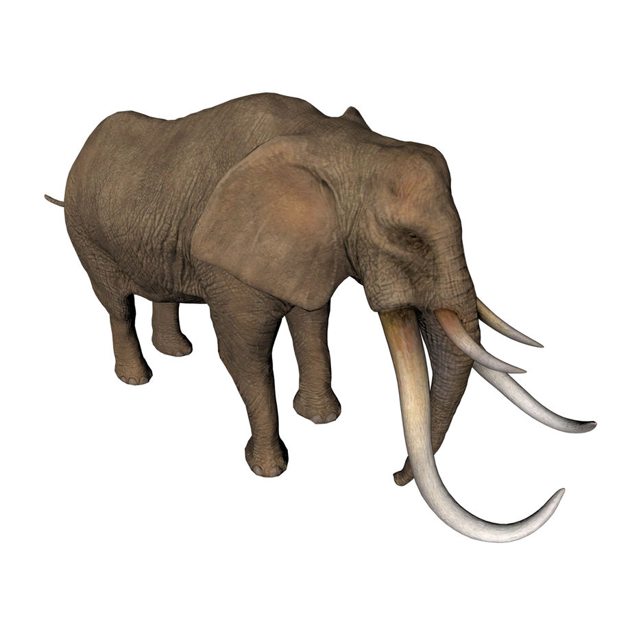 elephant four tusks royalty-free 3d model - Preview no. 4