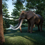 elephant four tusks 3d model