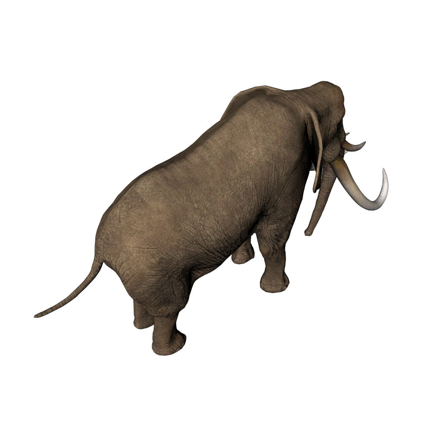 elephant four tusks royalty-free 3d model - Preview no. 5