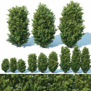 Taxus Baccata # 7 Three sizes 65-130 cm 3d model