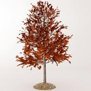 秋のオーク1 3d model