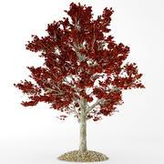Acero rosso autunnale 3d model