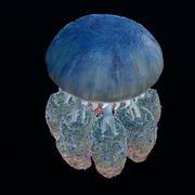 Jellyfish giant 3d model