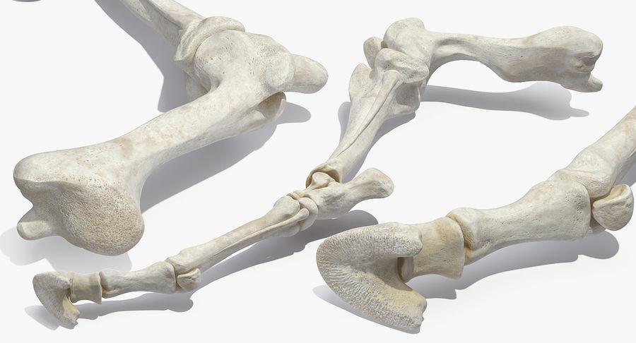 Horse Front Leg 2 3D Model royalty-free 3d model - Preview no. 6
