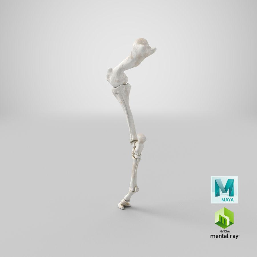 Horse Front Leg 2 3D Model royalty-free 3d model - Preview no. 28
