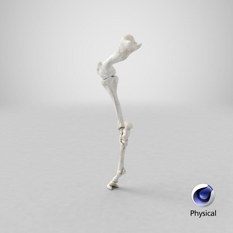Horse Front Leg 2 3D Model royalty-free 3d model - Preview no. 20