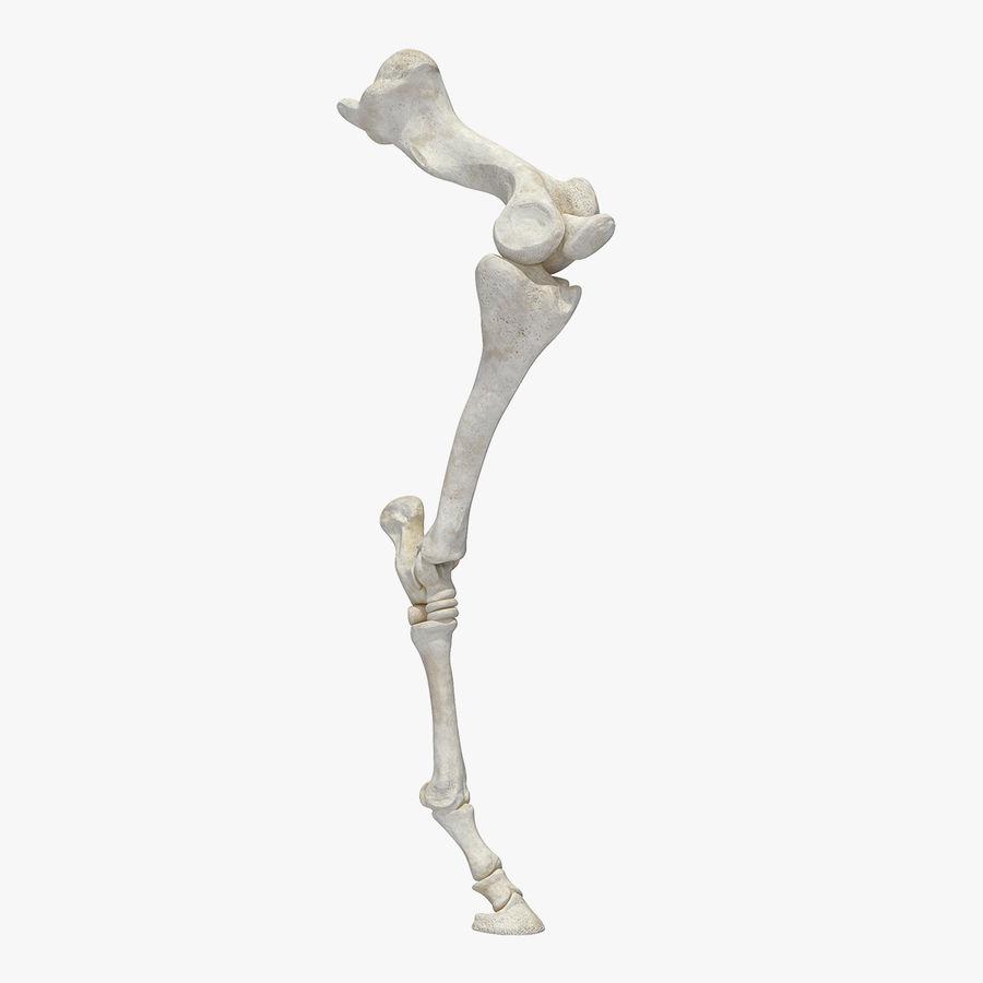 Horse Front Leg 2 3D Model royalty-free 3d model - Preview no. 1