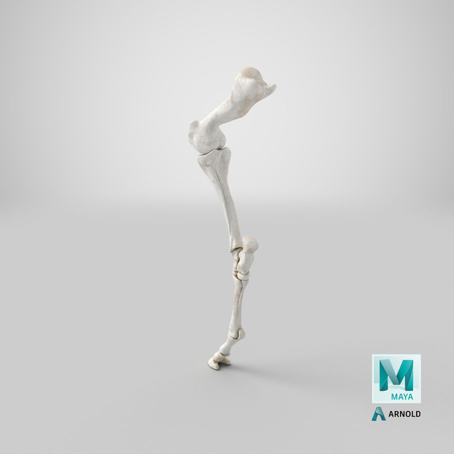 Horse Front Leg 2 3D Model royalty-free 3d model - Preview no. 27