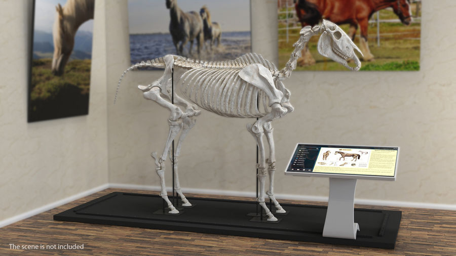 Horse Front Leg 2 3D Model royalty-free 3d model - Preview no. 3
