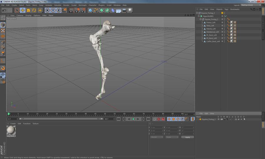 Horse Front Leg 2 3D Model royalty-free 3d model - Preview no. 16