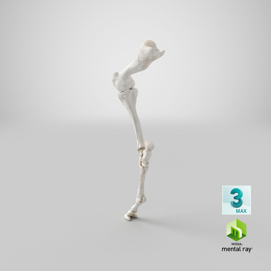 Horse Front Leg 2 3D Model royalty-free 3d model - Preview no. 25