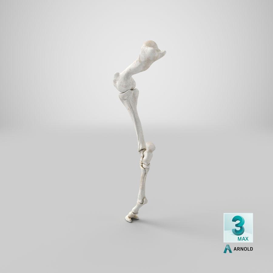 Horse Front Leg 2 3D Model royalty-free 3d model - Preview no. 24