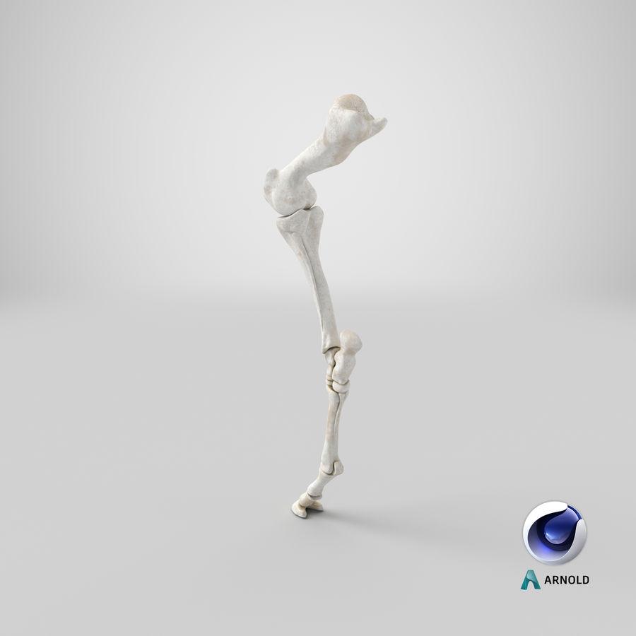 Horse Front Leg 2 3D Model royalty-free 3d model - Preview no. 21