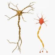Neuron 3D-modellencollectie 3d model