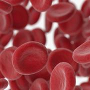 Kan damarları 3d model