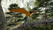 앵무새 3d model