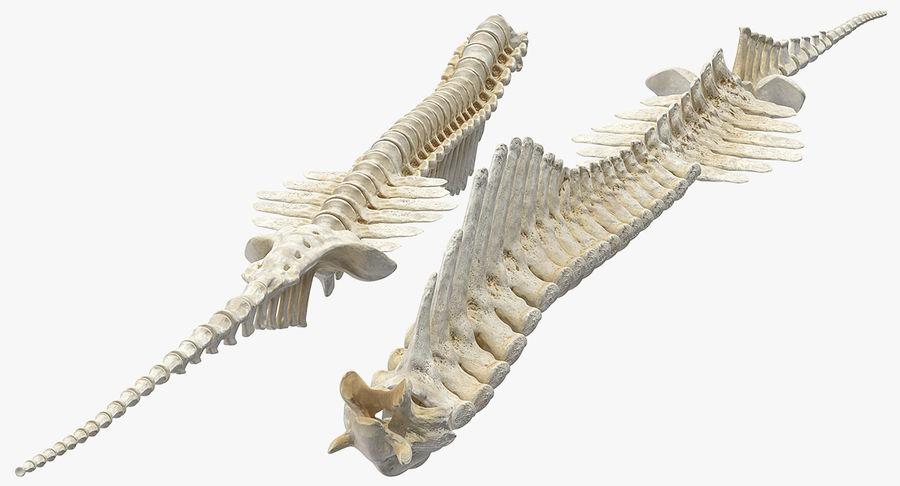 Animal Spine Vertebrae Bones 3D Model royalty-free 3d model - Preview no. 5