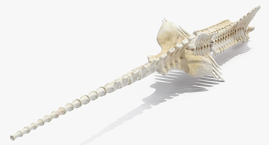 Animal Spine Vertebrae Bones 3D Model royalty-free 3d model - Preview no. 4