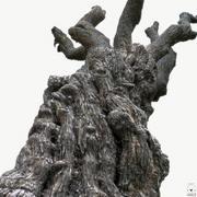 Pień drzewa (b) 16k tekstur 3d model