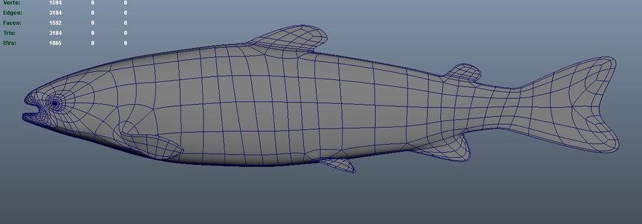 鲑鱼王-Oncorhynchus tshawytscha royalty-free 3d model - Preview no. 5