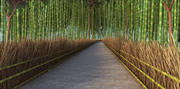 Bambu Ormanı, Japonya 3d model