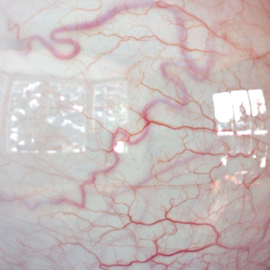 Реалистичный человеческий глаз V2 royalty-free 3d model - Preview no. 24