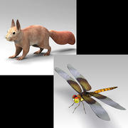 Squirrel_Dragonfly 3d model