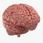 Human Brain (3D Printable) 3d model