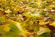 Autumnal soil HD 3d model