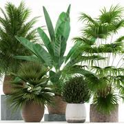 Plants collection 125 3d model