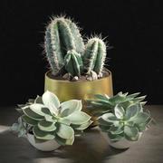 Bitkiler 01 kümesi 3d model
