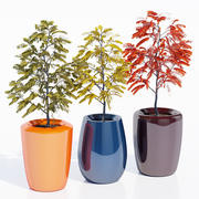 Träd ett 3d model