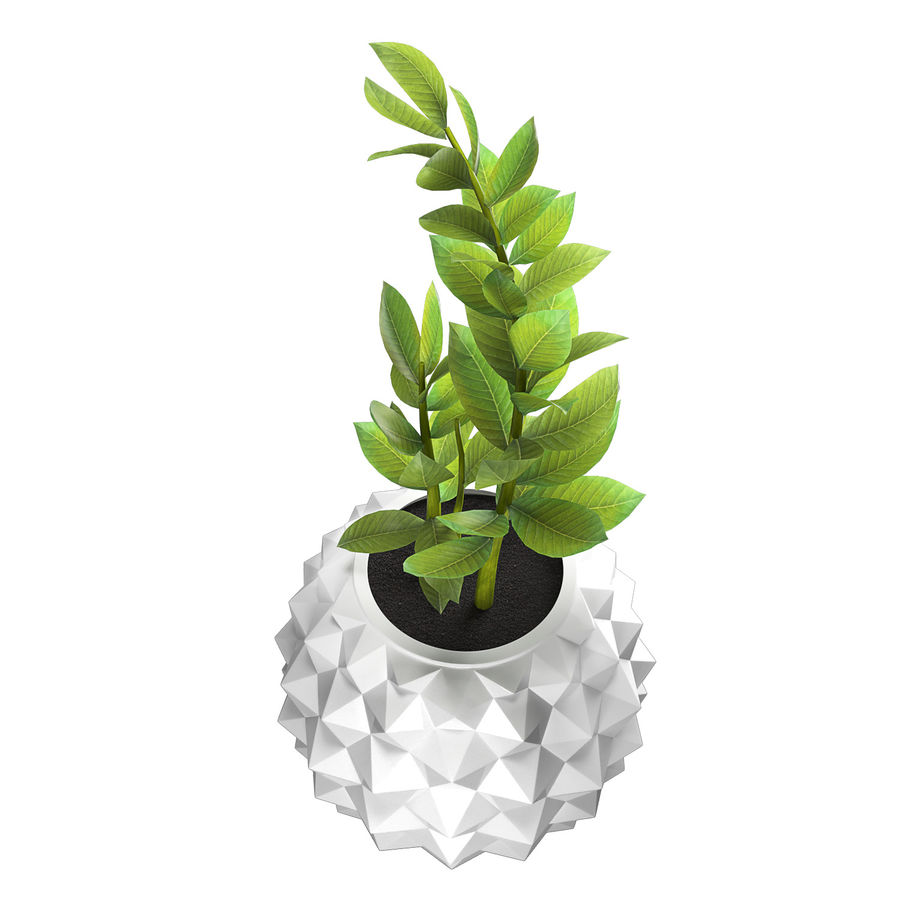 Bloempot met plant royalty-free 3d model - Preview no. 2