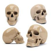 insan kafatası 3d model