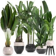 Plantas exóticas banano modelo 3d